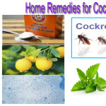 Unbelievable Remedy You Can Prepare at Home to Get Rid of Cockroaches Overnight!