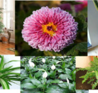 10 Air Purifying Plants for Better Sleep – Put them Next To Your Bed!