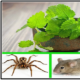IF-YOU-HAVE-THIS-PLANT-IN-YOUR-HOUSE-YOU-WILL-NEVER-SEE-MICE-SPIDERS-AND-OTHER-INSECTS-AGAIN